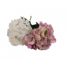 Hortensia géant H.60 blanc