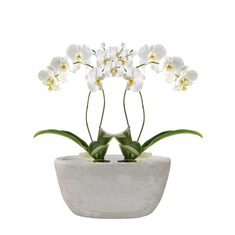 Double coupe basse orchidées Maia - grossiste décoration céramique