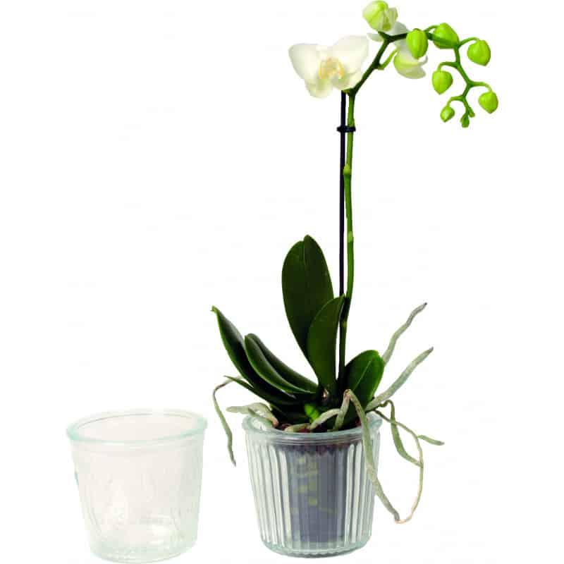 Pot fantaisie avec relief Elma - 2 modèles - grossiste verrerie fleuriste décoration
