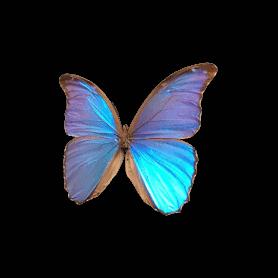 Boite de 6 papillons papier...