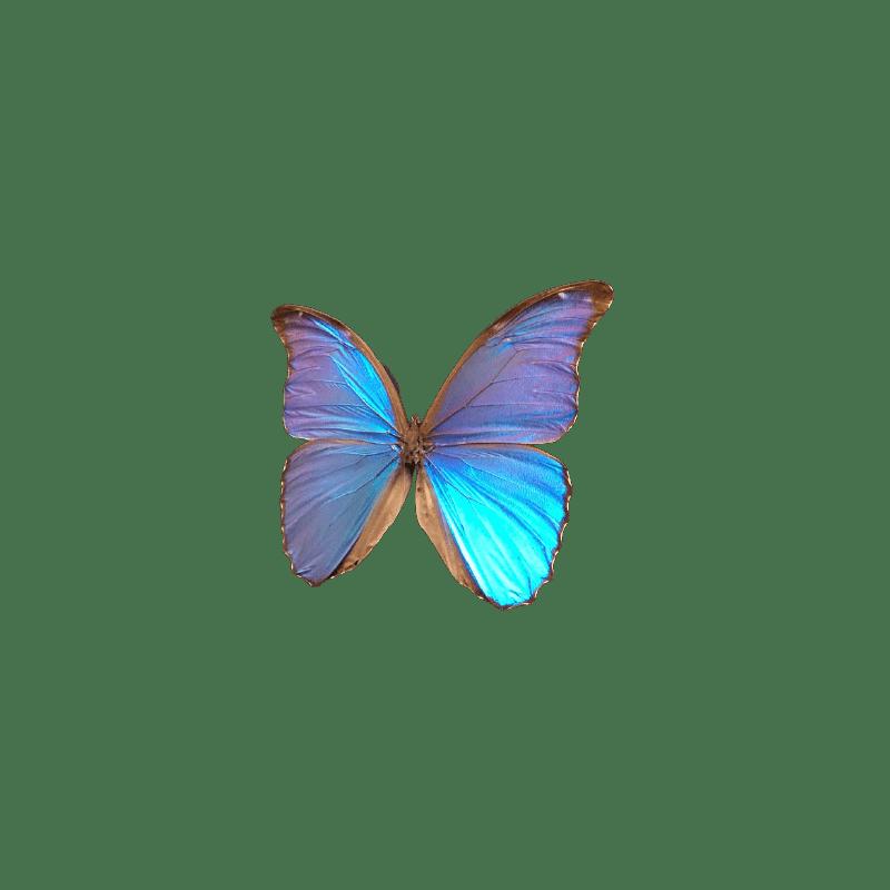 Boite de 6 papillons papier Blea - grossiste fleuriste