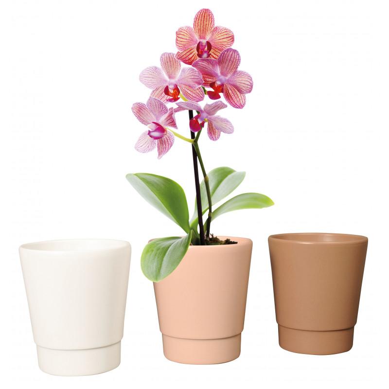 Pot phalaéno D.13.5 x H.15.5cm - Plusieurs couleurs - grossiste fleuriste