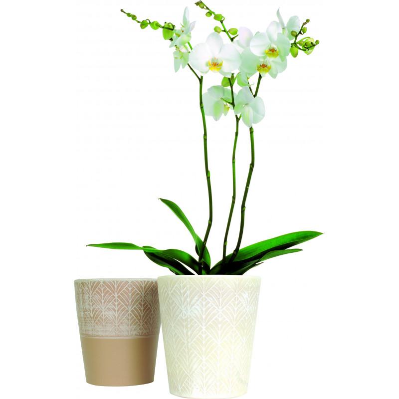 Pot phalaéno fantaisie - D. 13.5cm x H. 15.5cm - grossiste fleuriste