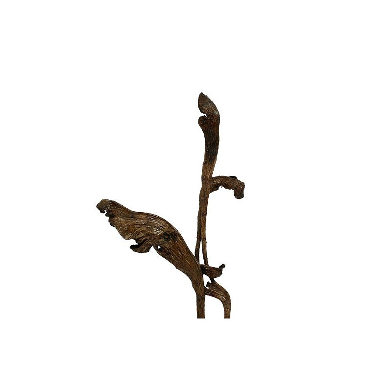 Natraj naturel Phalia - Sachet de 10 pièces - grossiste fleurs séchées