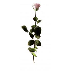 rose éternelle grossiste