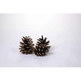 Pommes de pin naturelles décoration de Noël